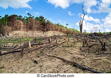 deforestation, em, a, filipinas