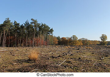 Deforestation Galderse Heide - A sad view of deforestation...