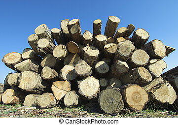 Deforestation - group of pine logs cut