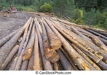 deforestation - group of pine logs felled in a forest, Anso...