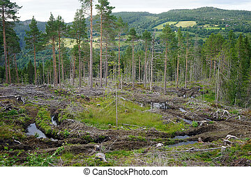 Deforestation in forest in Norway