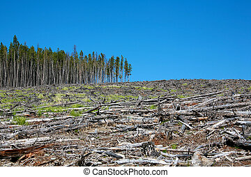 Deforestation stock image. Image of heap, empty, naked 13801429.