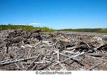 Deforestation in the mountains of British Columbia Canada