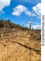 Deforestation in the Philippines - Deforestation in El Nido,...
