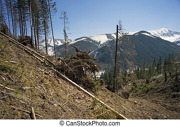 Deforestation in the Tatra Mountains
