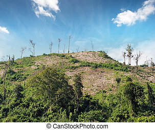 Deforestation nature background. Cut trees on hills