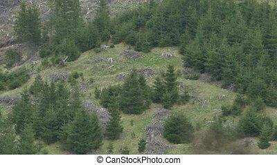 Deforestation on Mountain Slope