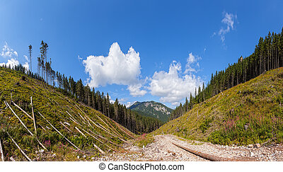 Deforestation - Panorama of destroyed woods in Tatras,...