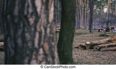 Deforestation. Pine logs lie in the forest