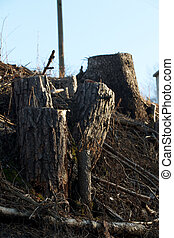 Deforestation  - tree stumps
