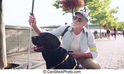 dehors, chien, aveugle, motion., lent, resting., guide, ville, homme aîné