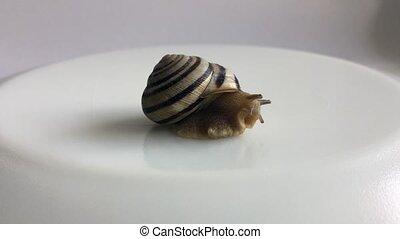 dehors, coquille, rampe, sien, escargot, fond, blanc