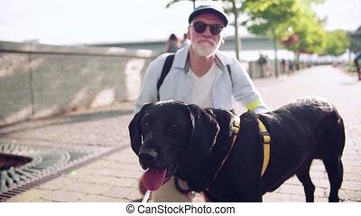 dehors, ville, personne agee, resting., motion., guide, aveugle, lent, homme, chien