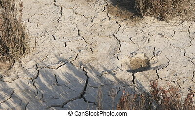 Dehydrated dry soil in the desert