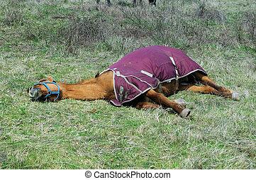 Brown horse taking a sun bath in a grass field