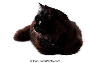 deitando, gato, baixo, experiência preta, branca
