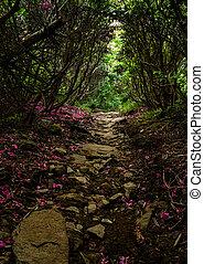 dekking, bladeren, spoor, rododendron, appalachian
