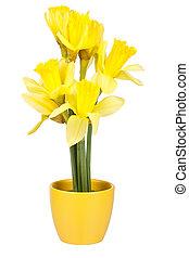 dekoráció, edény, virág, húsvét, nárciszok