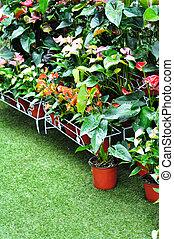 dekor, kleingarten, pflanze