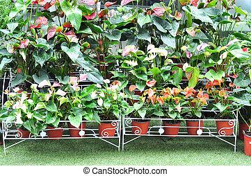dekor, pflanze, kleingarten