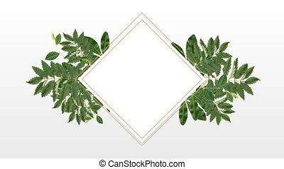 dekoracyjny, przestrzeń, kopia, zdejmować budowę, roślina