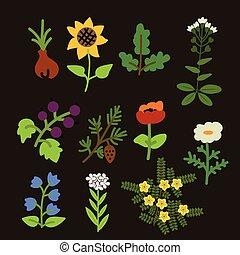dekoracyjny, rośliny, komplet