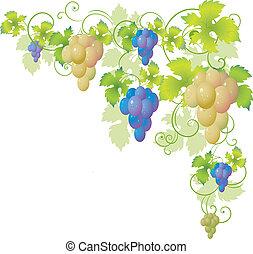 dekoratív, sarok, szőlőtőke