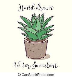 dekoration, bunte, pflanze, saftig, in, a, beton, blume, pot., hand, gezeichnet, vektor, illustration.