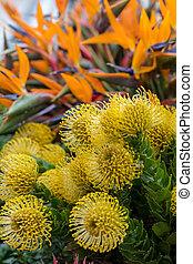 dekoration, madeira, blumen, insel, tropische , floristic, ...