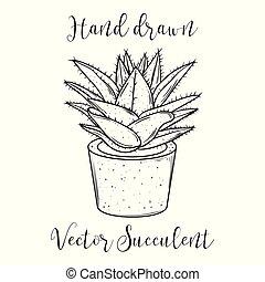dekoration, pflanze, saftig, in, a, flowerpot., hand, gezeichnet, vektor, illustration.