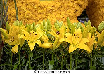 dekoration, tulpen, lilien, floristic, gelber