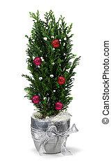 dekoration, zypresse, weihnachten