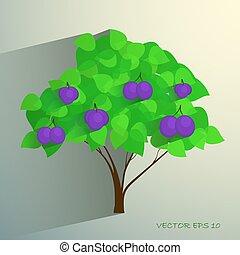 dekorativ, pflaumenbaum, reif, früchte