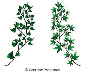 dekorativ, silhouette, zweig, -, blätter, vektor, grüner hintergrund, weißes