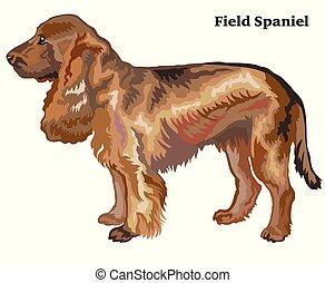 dekorativ, stehende , gefärbt, feld, hund, abbildung, spaniel, vektor, porträt
