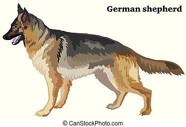 dekorativ, stehende , gefärbt, schafhirte, deutsch, hund, abbildung, vektor, porträt