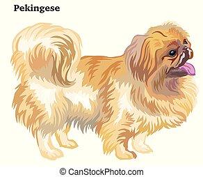dekorativ, stehende , pekingese, gefärbt, hund, abbildung, vektor, porträt