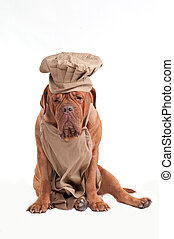 delantal, cansado, de, chef, burdeos, sombrero, dogue