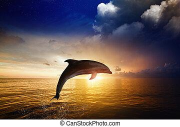delfín, saltar