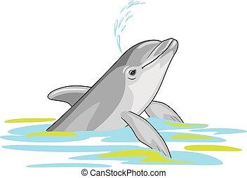 delfin, glücklich, wasser, spritzer