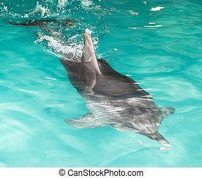delfin, in, den, slå samman