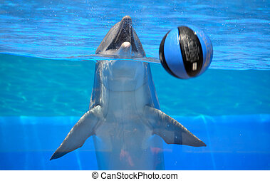 delfin, játék