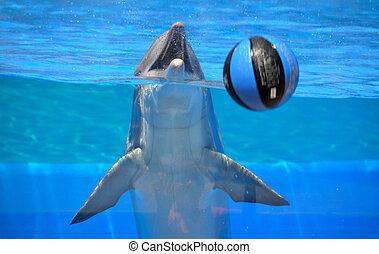 delfin, leka