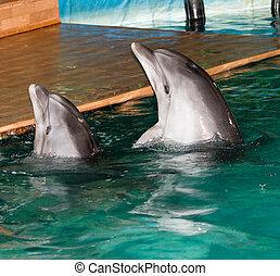 delfin, w, przedimek określony przed rzeczownikami, kałuża