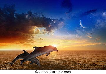 delfinek, élet, -, izzó, ugrás, napnyugta, háttér, tengeri