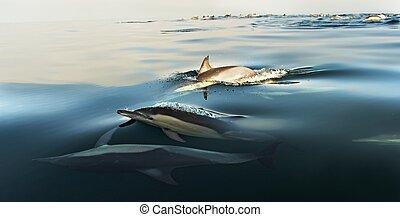 delfinek, úszás, óceán
