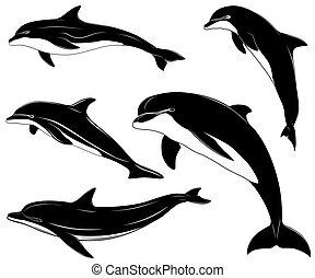 delfiner, sätta, kollektion, tatuera