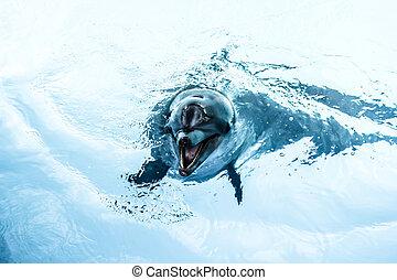 delfiner, simma, in, den, slå samman