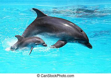 delfino, con, uno, bambino, galleggiante, acqua