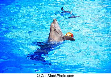 delfino, giocando palla